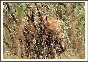 elefant-03