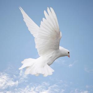 bird-suemack