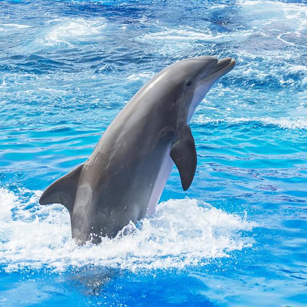 dolphin_dmitrimaruta
